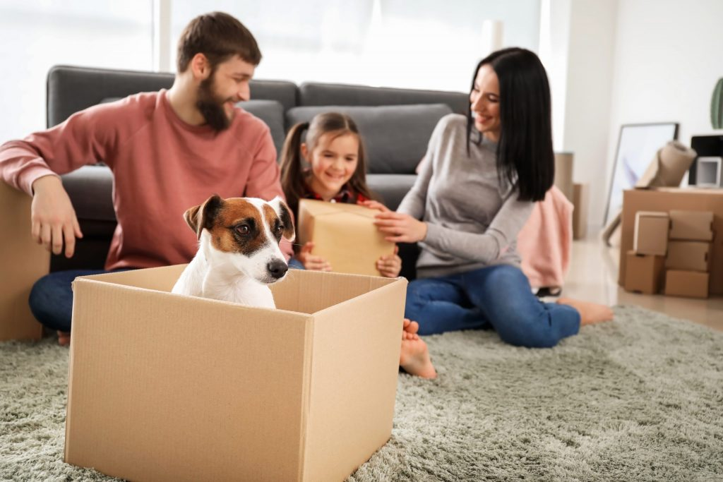 Moving house with pets